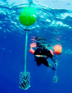 Lost diver buoys - underwater view